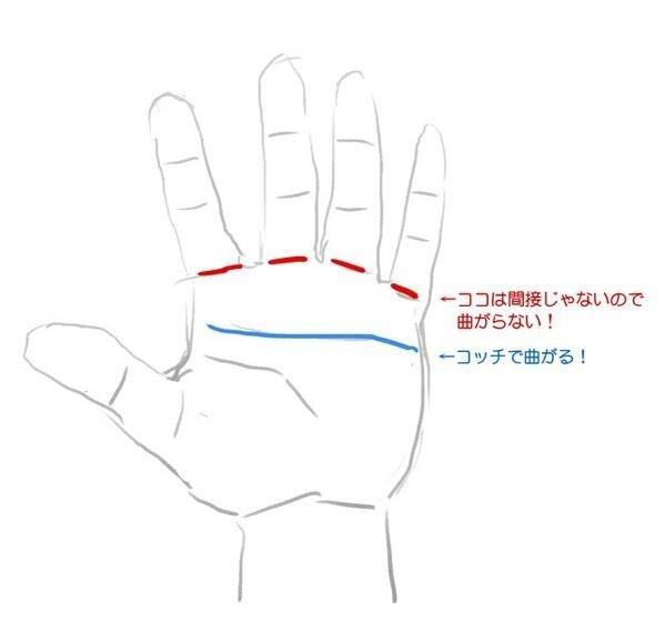 手の関節の新事実