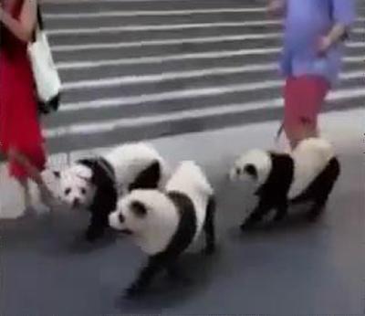 パンダに染められた犬