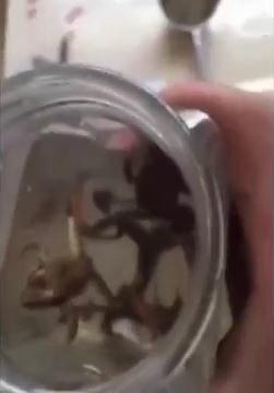 生きたカエルとオタマジャクシ