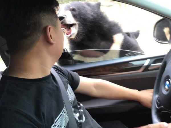 熊に襲われる直前