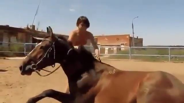 馬が神対応