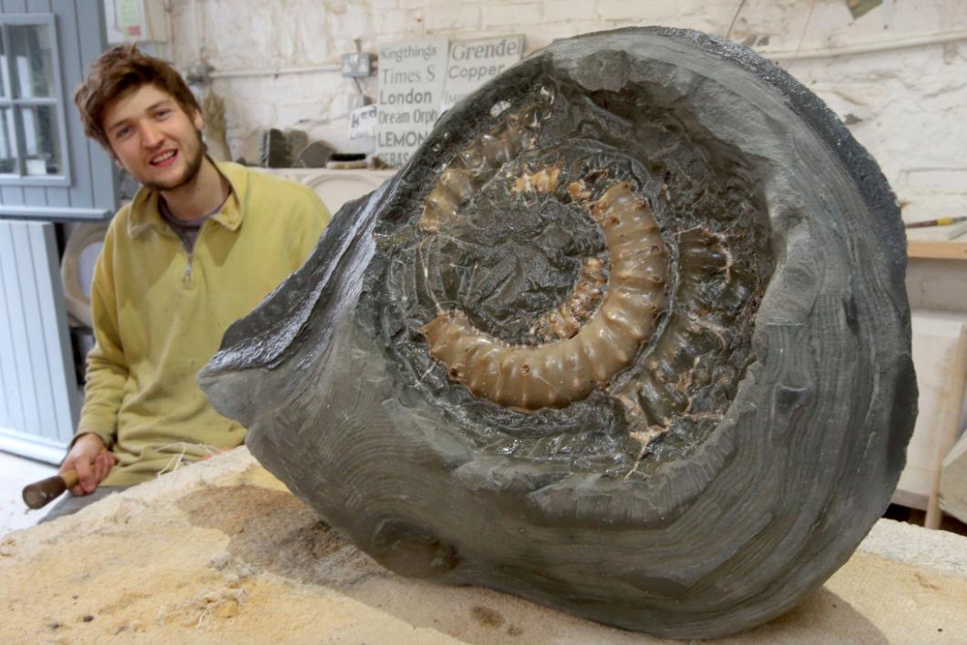 アンモナイトの化石