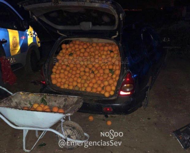 オレンジ窃盗犯