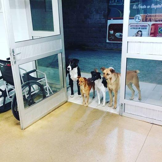 ブラジルでホームレスが入院 友だちの野良犬たちがお見舞いに来て大きな話題に
