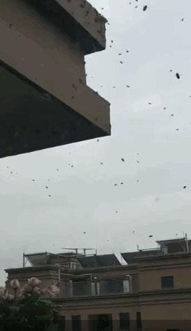 大量のミツバチ