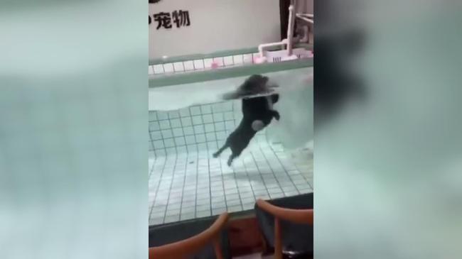 ペットショップ 犬溺死